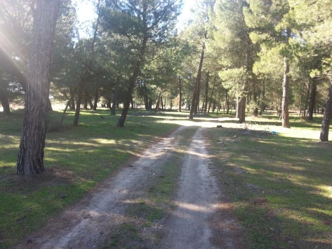 path-to-olmedo