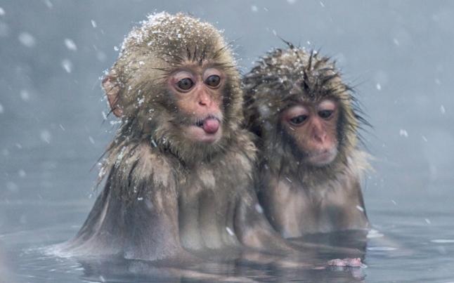 POTD-monkey_3529981k
