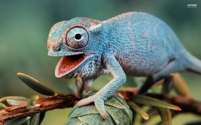 We all adapt our colours to fit into our environments like this chameleon